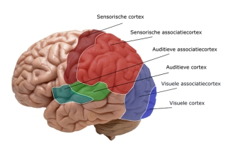 brainmaayke