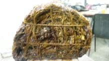 Rolmops